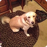 Adopt A Pet :: Mandy - Lewisville, IN