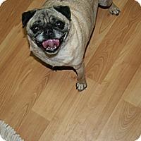 Adopt A Pet :: Barney P - Marietta, GA