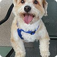 Adopt A Pet :: Poppy-Adoption pending - Bridgeton, MO