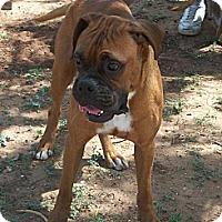 Adopt A Pet :: Beau - Post, TX