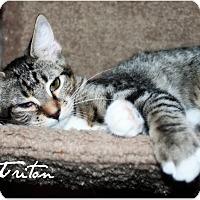 Adopt A Pet :: Triton - McKinney, TX