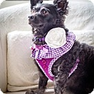 Adopt A Pet :: Penny is a cutie pie!