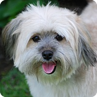 Adopt A Pet :: TAYLOR - Los Angeles, CA