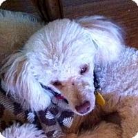 Adopt A Pet :: Cody Banks - Euless, TX