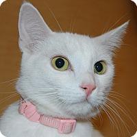 Adopt A Pet :: Princess - Whittier, CA