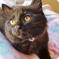 Adopt A Pet :: Tyrone - Colorado Springs, CO