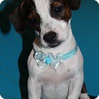 Adopt A Pet :: Chubbs - Trenton, NJ