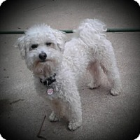 Adopt A Pet :: Skipper- - Mississauga, ON