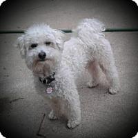 Adopt A Pet :: Skipper- - Mississauga, ON