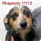 Adopt A Pet :: Rhapsody