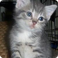 Adopt A Pet :: Abigail - Hampton, VA