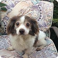 Adopt A Pet :: Bart 3367 - Toronto, ON