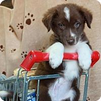 Adopt A Pet :: Byron - Foster, RI