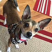 Adopt A Pet :: Sam - Littleton, CO