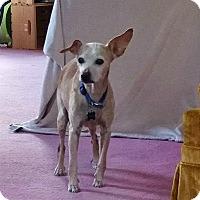 Adopt A Pet :: Max - Maybrook, NY