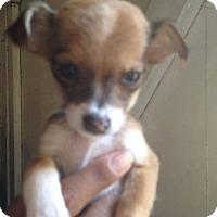Adopt A Pet :: Kimmy - LAKEWOOD, CA