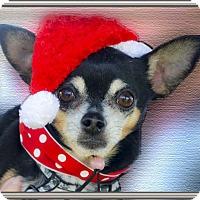 Adopt A Pet :: Cody loves everyone - Sacramento, CA