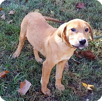 Retriever (Unknown Type) Mix Puppy for adoption in Livingston, Texas - Kye