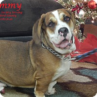Adopt A Pet :: Sammy - Bucyrus, OH