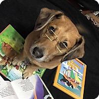Adopt A Pet :: Beemer - Great Bend, KS