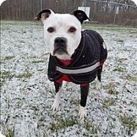 Adopt A Pet :: Roman - Delaware, OH