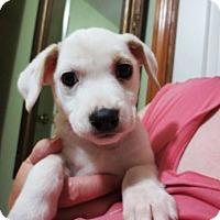 Adopt A Pet :: Crystal - Jill - Kalamazoo, MI