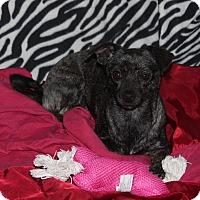Adopt A Pet :: Precious - Ridgecrest, CA