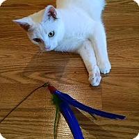 Adopt A Pet :: Levi - Concord, NC