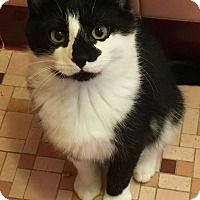 Adopt A Pet :: Quinny - Freehold, NJ