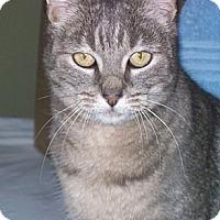 Adopt A Pet :: Purrsilla - Phoenix, AZ