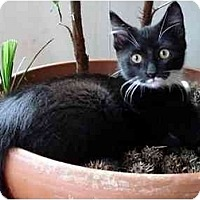 Adopt A Pet :: Beauregard - Alexandria, VA