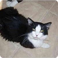 Adopt A Pet :: Glen - Hamburg, NY