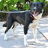 Adopt A Pet :: Duncan - Bellevue, NE