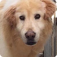 Adopt A Pet :: Murphy - Windam, NH