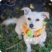 Adopt A Pet :: Mia - Kingwood, TX