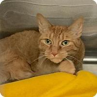 Adopt A Pet :: Tali - Webster, MA