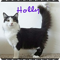 Adopt A Pet :: Holly - Simi Valley, CA