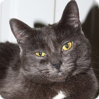 Adopt A Pet :: Adele - North Branford, CT