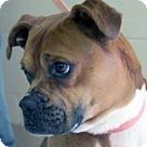 Adopt A Pet :: Bocephas