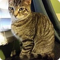 Adopt A Pet :: Henrietta - Louisville, KY