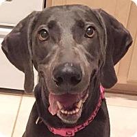 Adopt A Pet :: Milah - Orlando, FL