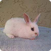 Adopt A Pet :: CeeCee - Bonita, CA