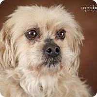 Adopt A Pet :: Teddi - Inver Grove, MN