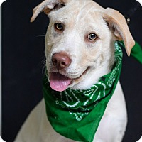 Adopt A Pet :: Rooney - Baton Rouge, LA