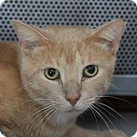 Adopt A Pet :: Ducky - Sarasota, FL