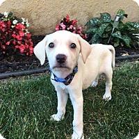 Adopt A Pet :: Raelene - New Oxford, PA