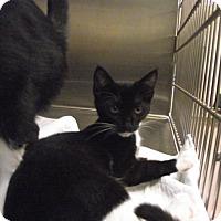 Adopt A Pet :: Liza - Chambersburg, PA