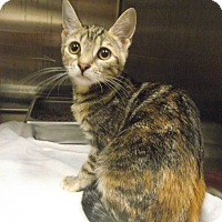 Adopt A Pet :: Piglet - Chambersburg, PA