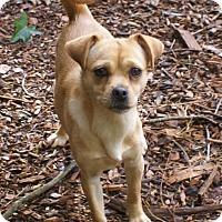 Adopt A Pet :: Bitsy - Greenville, SC