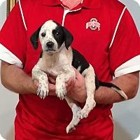 Adopt A Pet :: Sabastian - New Philadelphia, OH